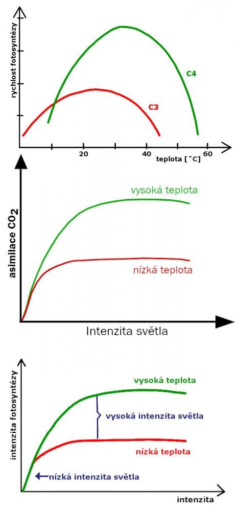 Vztahy mezi fotosyntézou, CO2, teplotou, intenzitou světla