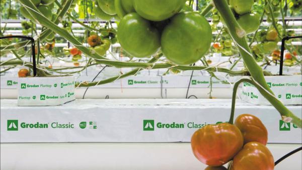 Grodan je rockwoolové médium na hydroponické pěstování