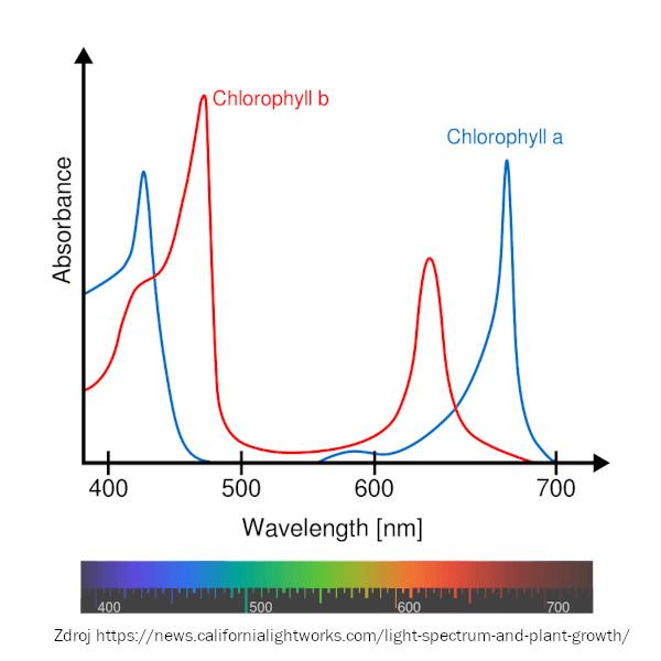 Průběh účinnosti fotosyntézy v závislosti na vlnové délce