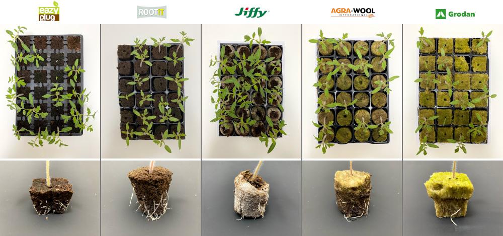 Růst a kořenový systém vyklíčených mladých rajčat v různých sadbovacích médiích