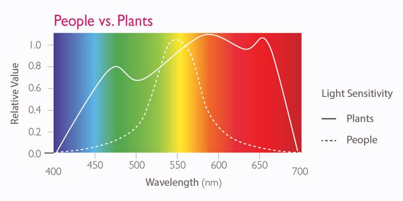 Světelné spektrum a rozdíl ve vnímání lidí a rostlin